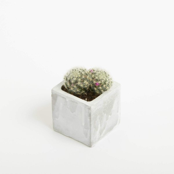 Square Concrete Planted Pot